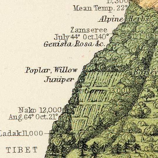 Henfrey's Geographical distribution of indigenous vegetation (1854) image detail